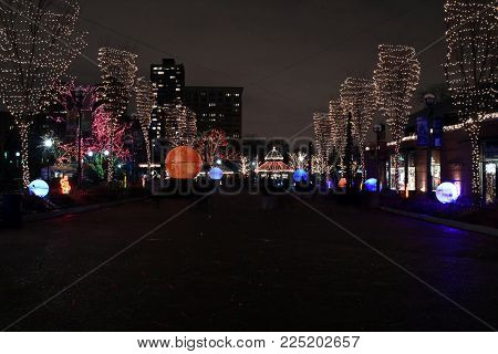 Two rows of trees illuminated in Christmas Lights for the Zoo Lights, Lincoln Park, Chicago, IL, December 13th, 2017