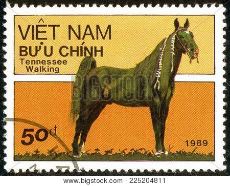 Ukraine - circa 2018: A postage stamp printed in Vietnam show horse of the breed Tennessee Walking Horse or Equus ferus caballus. Series: Horses. Circa 1989.