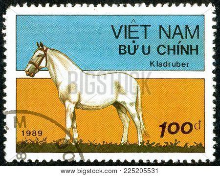 Ukraine - circa 2018: A postage stamp printed in Vietnam show horse of the breed Kladruber Horse or Equus ferus caballus. Series: Horses. Circa 1989.
