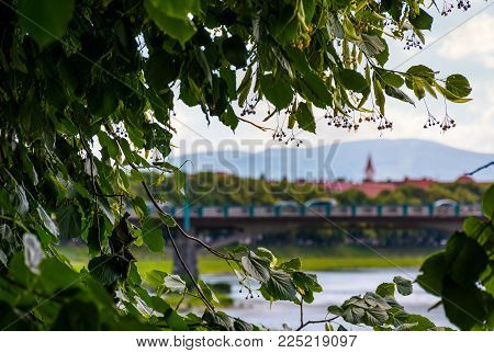 longest linden alley in europe. Summer landscape behind the branches on the river embankment in Uzhgorod, Ukraine.