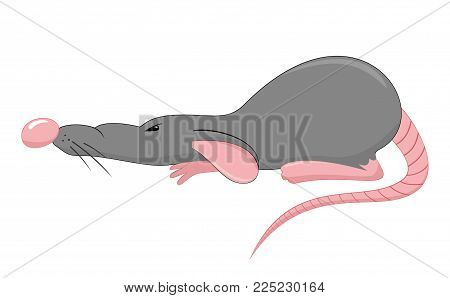 one gray rat cartoon on the white background