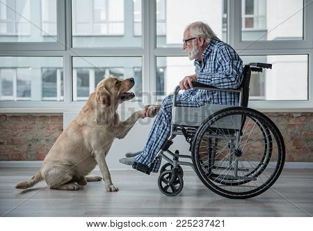 Peaceful Old Man Looking At His Hound And Holding The Paw Of It. Tranquil Man Is Sitting In Wheelcha
