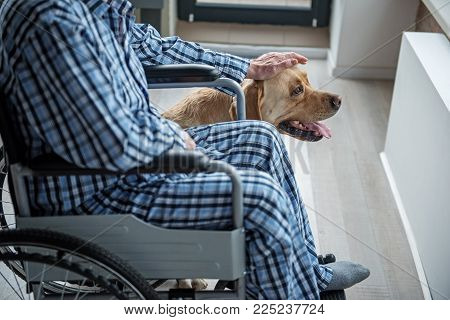Disabled Male Sitting In Invalid Chair In Room. He Is Stroking The Dog With His Hand. The Dog Is Sit