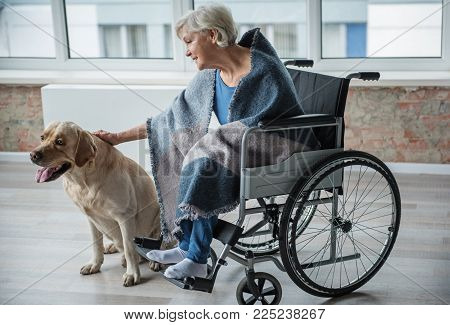 Tranquil old female sitting in invalid chair in room. She is stroking the dog with her hand. The dog is sitting near the chair poster