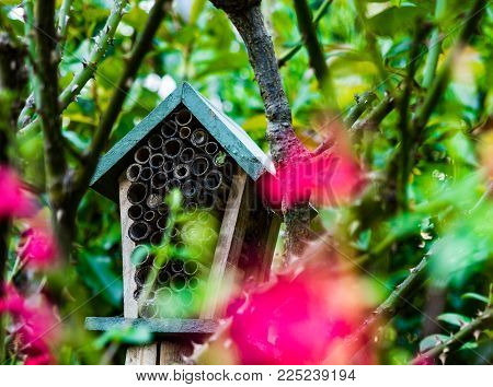 A wooden Bug Hotel hidden in a tree behind a rose bush