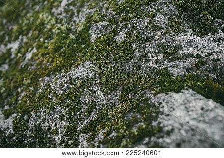 Moss texture. Mossy stone background. Green moss on the stone. Organic texture and background for design. Closeup view of green moss.