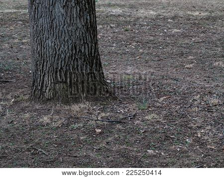 Tree and Forest Floor - Woodland image with copy space.
