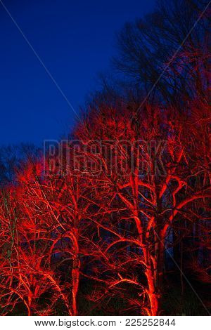 These bright red trees set against a deep, blue sky give an eerie, spooky feel to the scene.