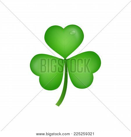Clover. Realistic three leaf clover for Saint Patrick's Day.