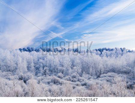 Winter Frosty Forest under Blue Sky
