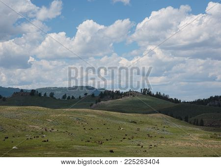Dramatic Yellowstone Landscape With Bison and Other Wildlife