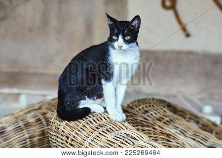 Black And White Cat On The Greek Island Of Corfu
