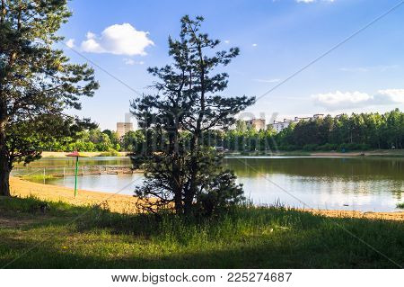 Young Pines Along The Natural Forest Lake With Artifical Sandy Beach, Been Adjusted For Free Public