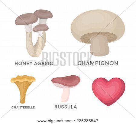 Champignon, honey, agarics, russula, chanterelle. set collection icons in cartoon style vector symbol stock illustration .