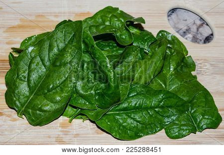 Fresh delicious homegrown organic herb basil.  Deep green healthy leaves to add flavor and aroma to many culinary favorites.