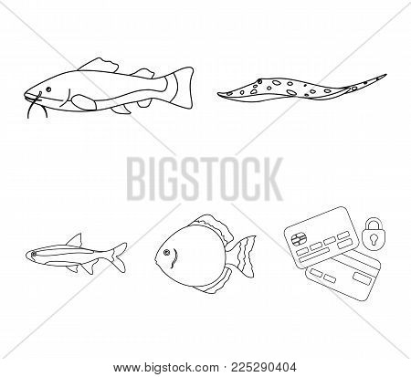 Angelfish, common, barbus, neon.Fish set collection icons in outline style vector symbol stock illustration .