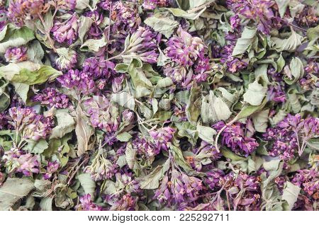 Dry herb with flowers Origanum vulgare background