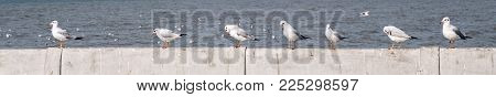 Closeup image of a group of seagulls standing on concrete wall by the ocean