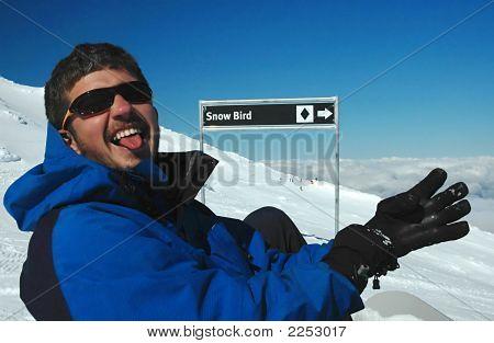 Snow Bird - Young Man Preparing To Take Black Trail