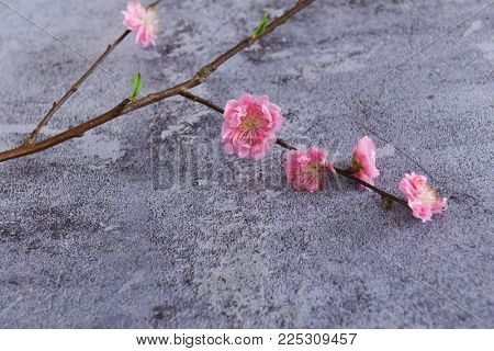 Lying on Blooming tree in spring isolated on gray background