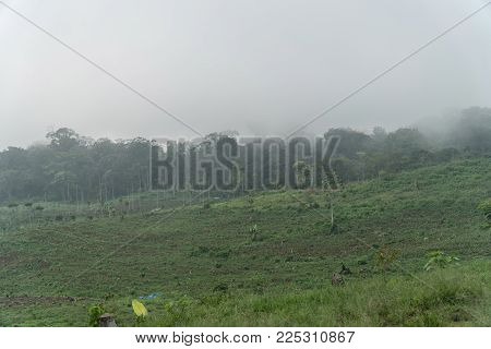 Farmland, fields with white fog, clouds Bali, Indonesia. Fog, cloud over farmland. Rural mountain landscape of fields with fence, trees.