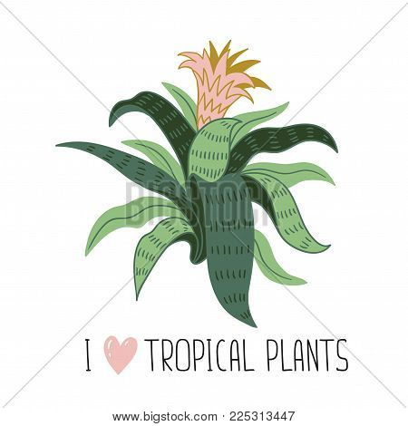 Hand drawn wild tropical house plant. Scandinavian style illustration, home decor. Vector print design with aechmea and lettering - 'I love tropical plants'.