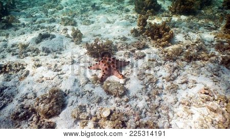 Red starfish amongst the coral. Hard and soft corals. Diving and snorkeling in the tropical sea. Travel concept.