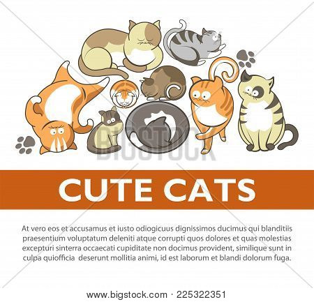 Funny cartoon cute cats and kittens playing poster. Vector flat design of funny cheerful kits and cats sleeping, play clew or smiling and comic posing