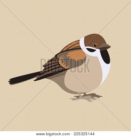 sparrow  fat vector illustration flat style  profile side