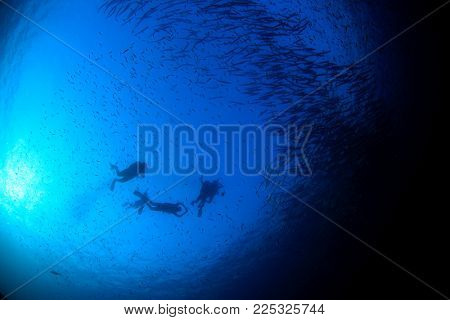 Scuba divers and school of Barracuda fish. Silhouette diving with fish in ocean