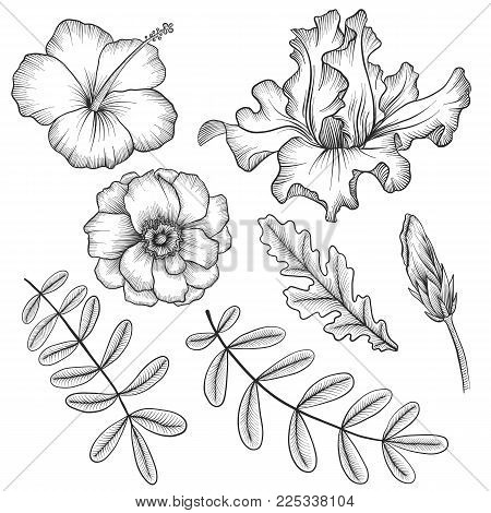 vintage vector floral set of isolated elements in victorian style, flowers, buds and leaves, imitation of engraving, hand drawn design elements