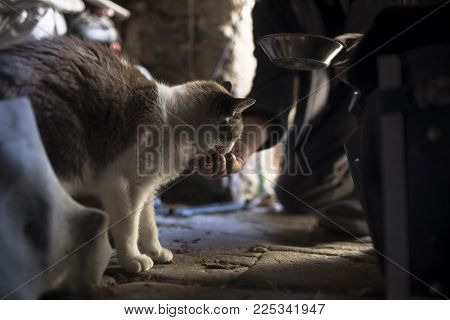 Man Feeding A Cat On A Wooden Floor