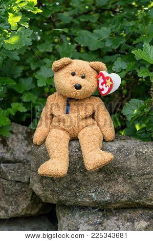 WREXHAM, UK - MAY 31, 2015: Collectible Ty Beanie Baby, Fuzz the bear. Birth date July 23 1998, retired December 23 1999. Sat on a stone wall with Gooseberry bush background. With heart shaped tag.