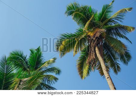 Palm trees against blue sky, Palm trees at tropical coast, vintage toned and stylized, coconut tree, summer tree , retro