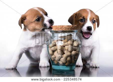 puppy and dog food, cookies in a bone form
