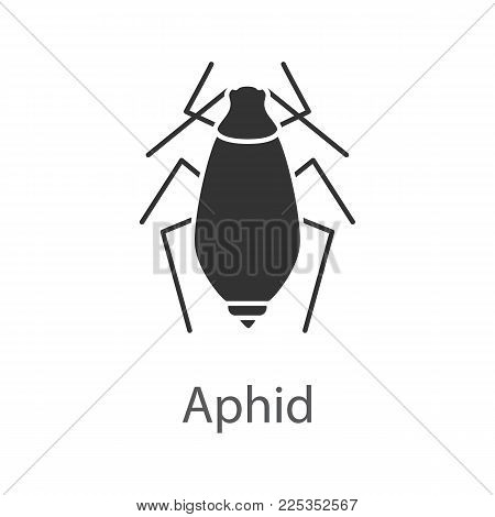 Aphid glyph icon. Insect pest. Plant lice. Silhouette symbol. Negative space. Vector isolated illustration