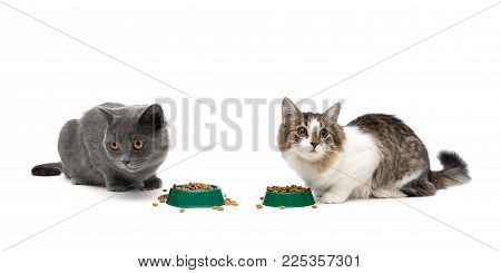 cats eat food isolated on white background. horizontal photo.