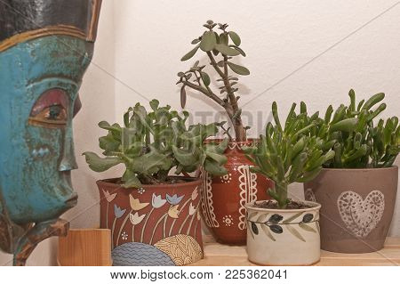 It Is Image Of Succulents And Decoration
