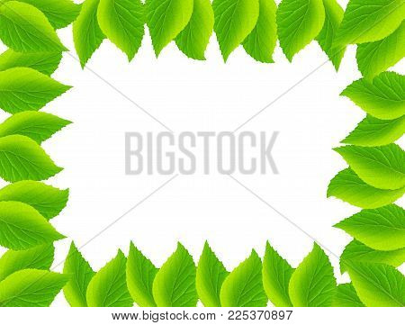 Natural frame from mint leaves.  Mint frame.