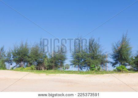 Pine And Sand Beach At Phuket , Thailand