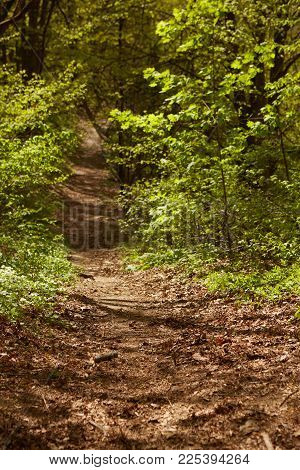 Forest Landscape. Path In The Forest. Background. Shallow Dof