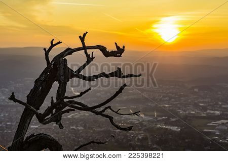 branch and sunrise in the remote Liberec