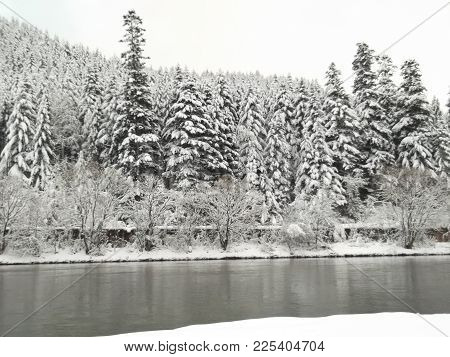 Mountain River In The Background Of A Forest Covered With Snow