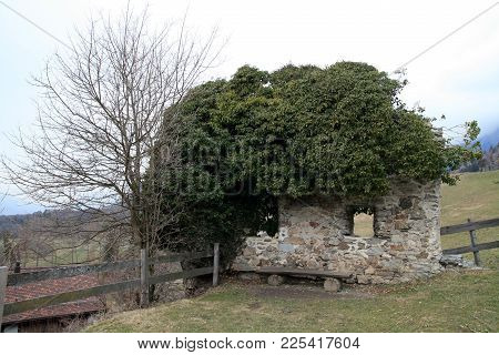 Old Wall Piece With Two Window Holes. Old Stone Wall Is Partially Disintegrated, The Ivy Grows Dense