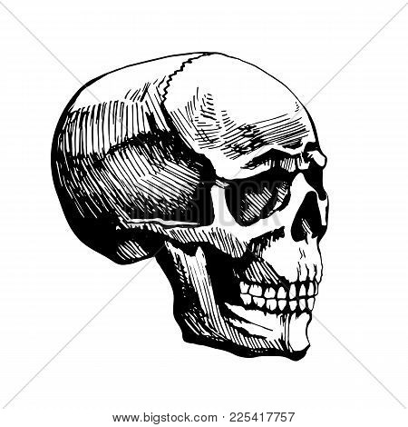 Skull Man Vector Sketch Painted By Hands. Illustration Stylized For Engraving. The Dead Head Is The