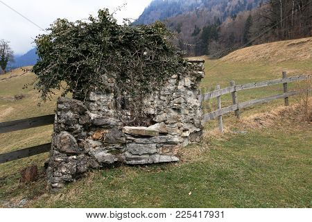 Old Stone Wall. Old Wall Of Stones Is Partly Disintegrated And Covered With Climbing Plants.