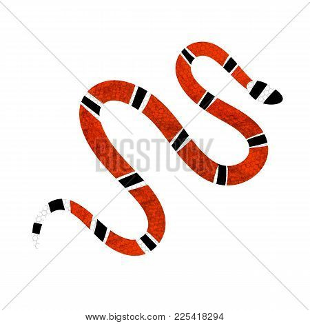 Lampropeltis Triangulum Vector.sticker And Hand Drawn Snake For Tattoo.red Snake Reptile On White Ba
