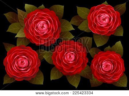 Red Camellia Flowers On A Black Background