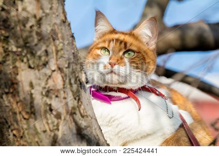 Cut Funny White-and-red On The Tree. Shallow Depth Of Field, Green Cat Eyes In The Focus. Beautiful