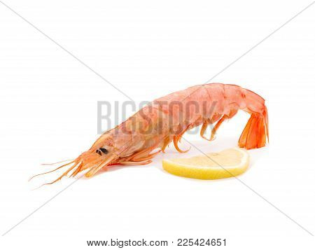 King Shripm With Slice Of Lemon. Copy Space Makro